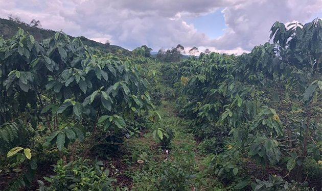 Bán Lô Đất 4.2 Sào Xã Lộc Châu Bảo Lộc